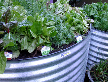 What to Grow in your Winter Garden Beds