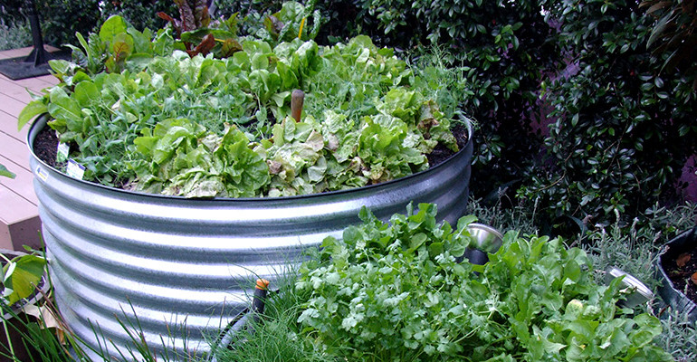 5 summer tips to help you look after your plants in your raised garden beds