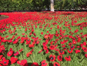 5,000 Poppies – Award Winning Garden Bed