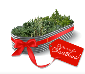 Perfect gift for Christmas